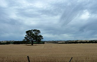 Rathscar, Victoria - Typical wheat country in central Victoria
