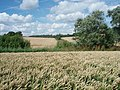 Wheat Fields - geograph.org.uk - 494623.jpg