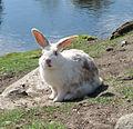 White bunny.jpg