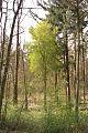Więcborski las.jpg
