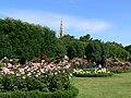 Wien Volksgarten Rathausturm Rosenblüte.jpg