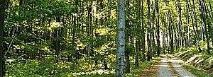 Vienna Woods - Vienna Woods near Breitenfurt