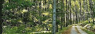 Vienna Woods mountain range near Vienna, Austria