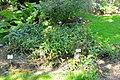 Wikipedia 13. Fotoworkshop Botanischer Garten Erlangen 2013 by-RaBoe 022.jpg