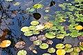 Wikipedia 13. Fotoworkshop Botanischer Garten Erlangen 2013 by-RaBoe 066.jpg