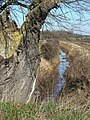 Willow and stream - geograph.org.uk - 1745565.jpg