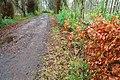 Winter path, Rabbit Hill, Ballymena - geograph.org.uk - 642851.jpg