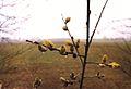 Wiosna na Krajnie, 3.4.1993 (Lobzenica).jpg