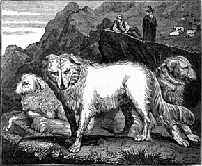 From commons.wikimedia.org/wiki/File:Wolf_dogs_of_the_Abruzzi.jpg: Wolf_dogs_of_the_Abruzzi.jpg