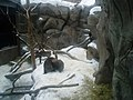 Wolverines at the Minnesota Zoo.jpg