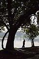 Woman - Santragachi Lake - Howrah 2013-01-25 3605.JPG