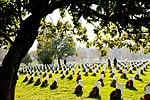 Wreaths Across America at Arlington National Cemetery 121215-F-QN515-236.jpg