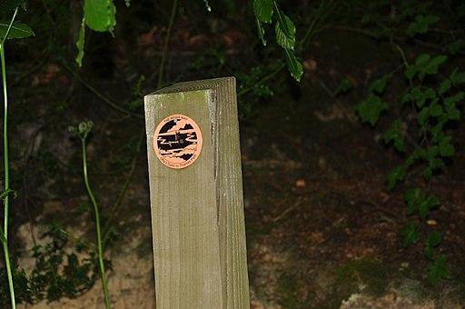 Wysis Way marker in Forest of Dean near Symonds Yat (9777)