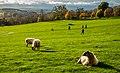 Yorkshire Sculpture Park IMG 8535 - panoramio.jpg