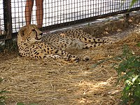 Zoo in Yalta 002.jpg