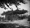 """""""Vrt"""", ograjen s kanelo, Sabadini 1950.jpg"""