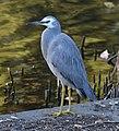 (1)Heron-1.jpg