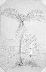 [Tree fern with river and mountain in background]