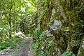 Ђердапска клисура, шумска стаза.jpg