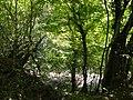 Берег реки Жанэ - panoramio.jpg