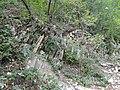 Верхний парк Сафари-парка. Деревья на скала - panoramio.jpg