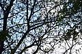 Горіх Чорний. Гунські криниці. Фото 1.jpg