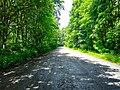 Дорога в с. Осташки, фото 2.jpg