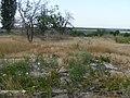 Заброшенный дачный посёлок - panoramio (48).jpg