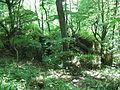 Медобори, ліс.JPG
