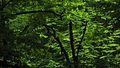 Національний природний парк «Голосіївський», на берегах каскаду Горіхуватських ставків «ЗЕЛЕНИЙ ФАНТАЗМ».jpg