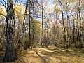 "Осенний день в парке ""Олимпик"" - panoramio.jpg"