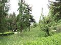 Парк шума Гази Баба во мај (128).JPG