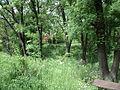 Парк шума Гази Баба во мај (29).JPG