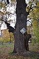 Перунів дуб, вул. Курська,3.jpg