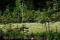 Сколівські бескиди Журавлине озеро DSC 0382.jpg