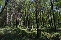 Старовинне козацьке кладовище в с. Трахтемирів (6).jpg