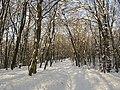 Украина, Киев - Голосеевский лес 167.jpg