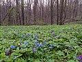 Цветочная поляна с первоцветами.jpg