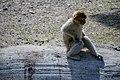 مجموعه عکس از رفتار میمون ها در باغ وحش تفلیس- گرجستان 19.jpg