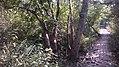 উদ্যানের পথ.jpg