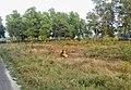 সাফারী কিংডম প্রদর্শনের সময় একটি বাঘের দেখা।.jpg