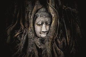 Phra Nakhon Si Ayutthaya Province - Buddha head overgrown by fig tree, Wat Mahatat, Ayutthaya historical park