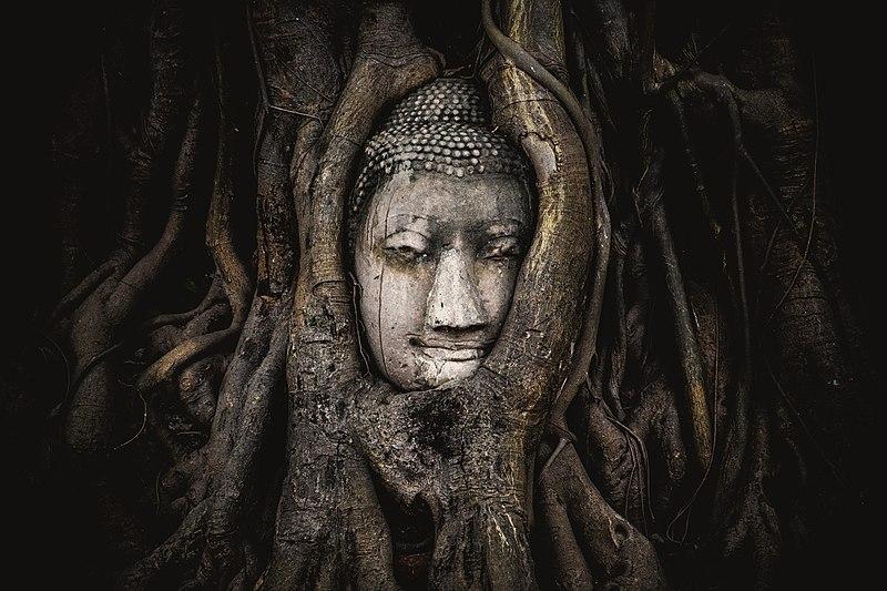 5 місце. Голова Будди у храмі Ват Махатхат, Аютайя, Таїланд. Автор фото — Siripatwongpin, ліцензія CC-BY-SA-4.0