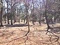 ネーブルパーク - panoramio (1).jpg