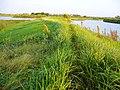 堤埂 - panoramio.jpg