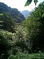 山高林密 - panoramio.jpg
