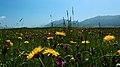 热尔大坝草原Rerdaba grassland - panoramio (6).jpg