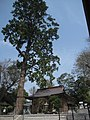 顕宗仁賢神社 Kensou-Ninken shrine - panoramio (1).jpg