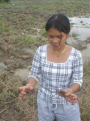 08 Thidawan with the Crabs (July 2000).jpg