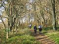110928-Ardgowan-woods.jpg